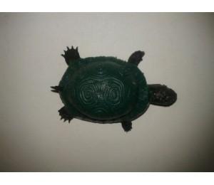 Böcek ve Hayvanlar - Şaka Kaplumbağa Kaucuk