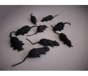 Böcek ve Hayvanlar - Siyah Fındık Faresi